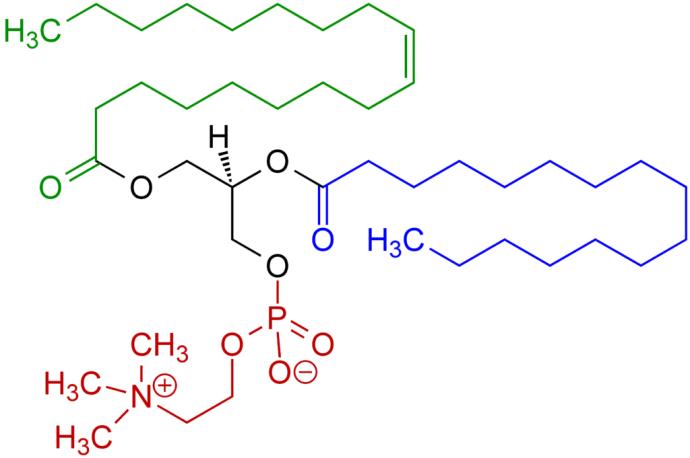 Phosphatidylcholine Formula